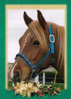 Kool Tivito Pep - Stallion On Black River farm